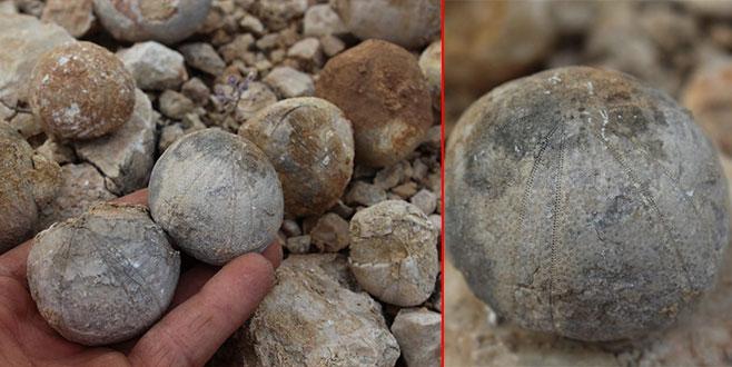 Çoban buldu! 85 milyon yıllık