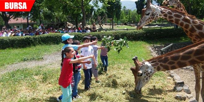 Hayvanat Bahçesi'nde bayram rekoru
