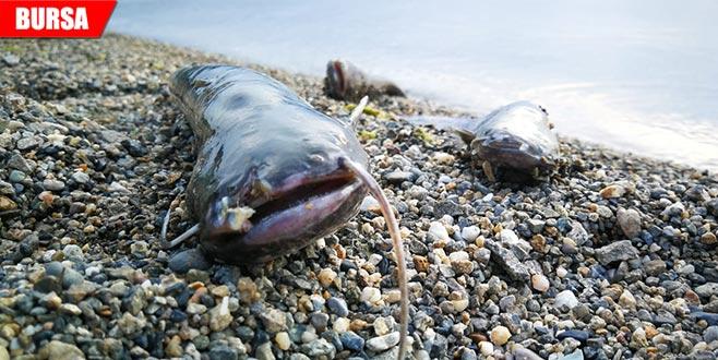 Paniğe sebep olan balık ölümleri