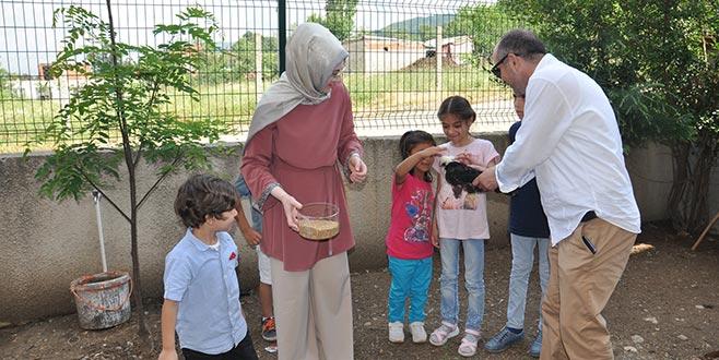 Çocuklar okulda tavuk besliyor