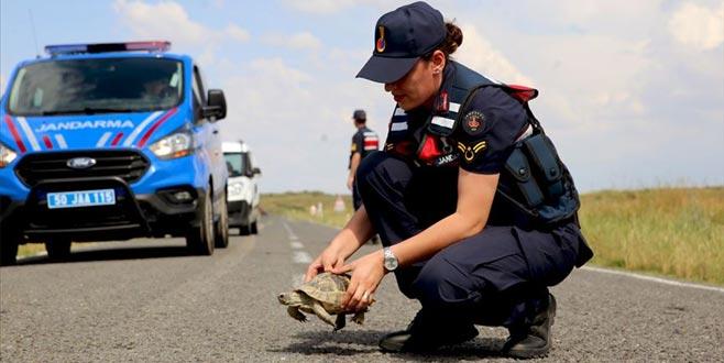 Jandarmanın 'kaplumbağa' mesaisi