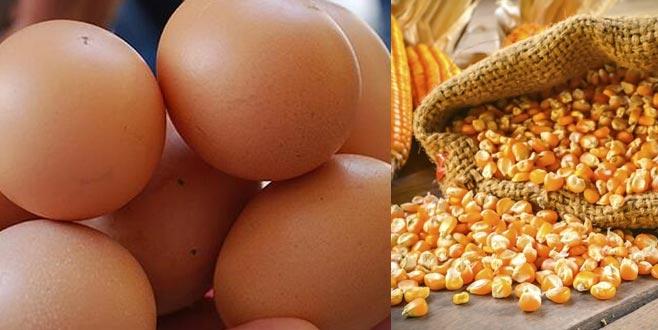 Yumurtaya mısır desteği