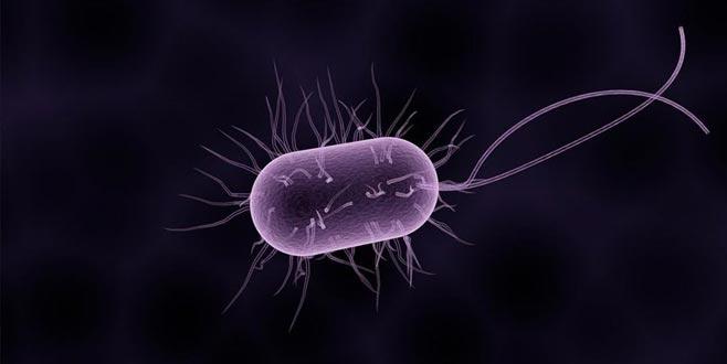 İngiltere'yi alarma geçiren bakteri
