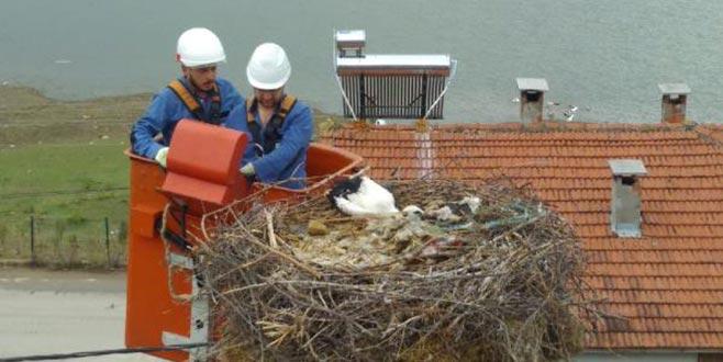 Sakat yavru leyleği, elektrik firması ekipleri kurtardı