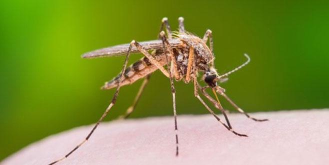 'Batı Nil Virüsü' tehlikeli mi?