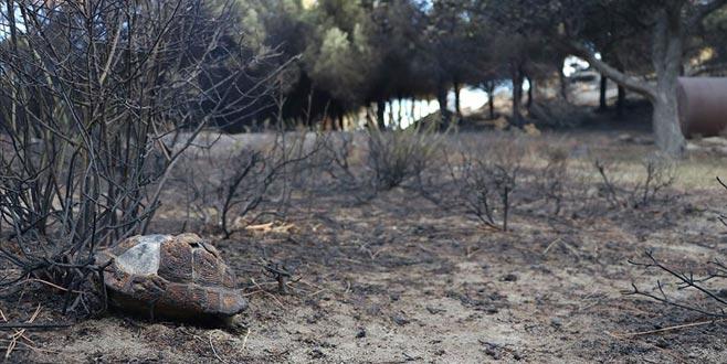 Marmara Adası için ağaçlandırma seferberliği başlatılacak