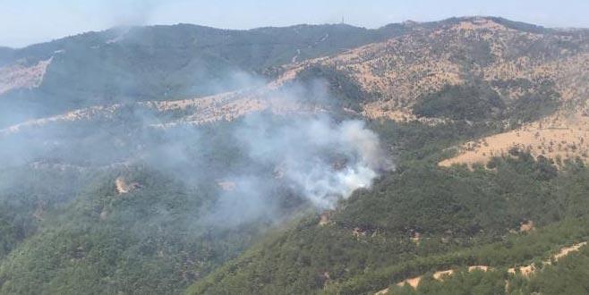 Bir orman yangını daha