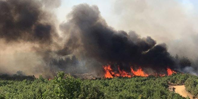 Bir yangın da Edirne'de çıktı