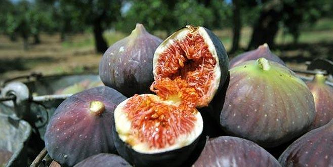 Siyah incirde ne üretici ne de ihracatçı memnun