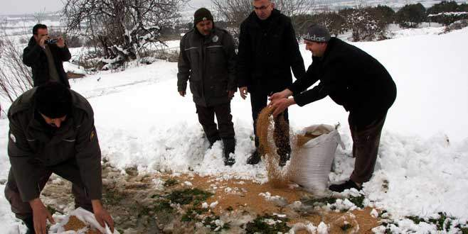 Karda aç kalan hayvanlara 2 ton yem bırakıldı