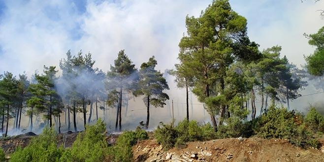 Çamlık alanda yangın