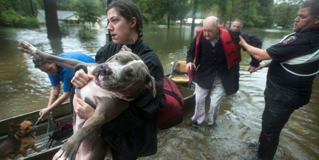 Teksas sular altında