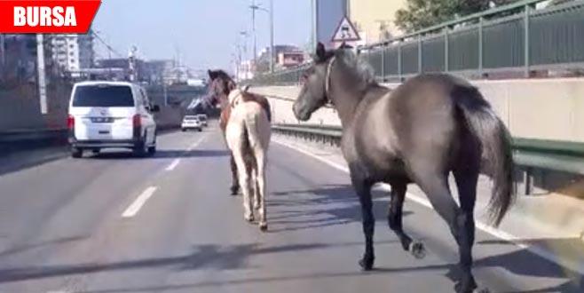 Başıboş atlar sürücülere zor anlar yaşattı