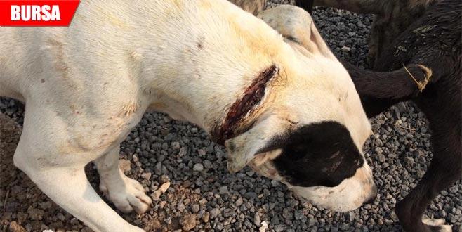 Boynu kesilmiş halde bulunan köpeğe vatandaşlar sahip çıktı