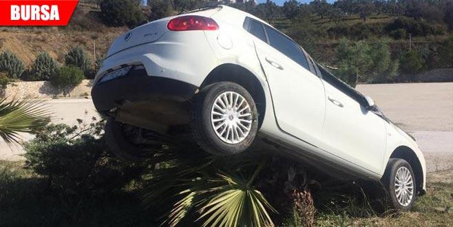 Kontrolü kaybeden otomobil ağaca çıktı