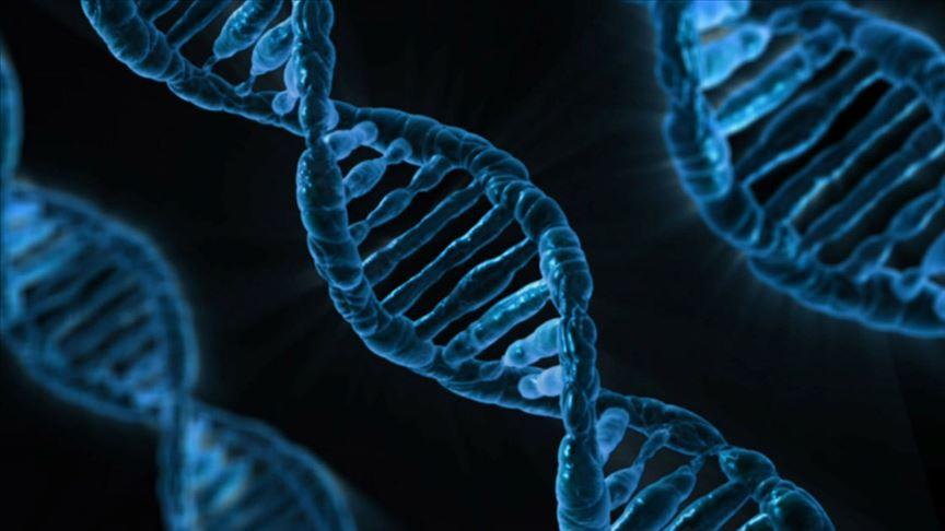 Genleri düzenlenen T hücreleri kanser hastalarında kullanıldı