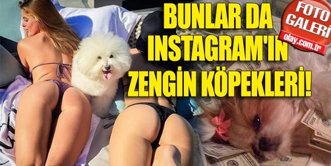 Bunlar da Instagram'ın zengin köpekleri!