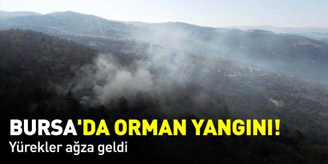 Bursa'da orman yangını! Yürekler ağza geldi