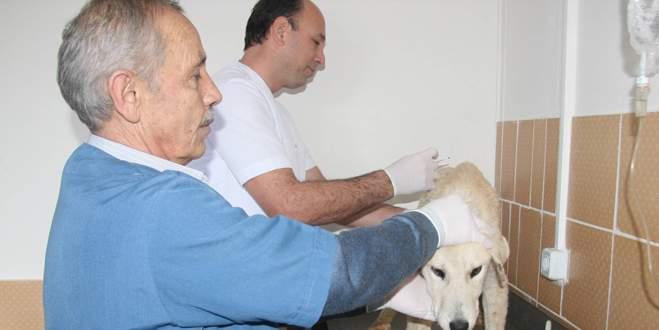 Ölü bulunan köpeklerde zehre rastlanmadı