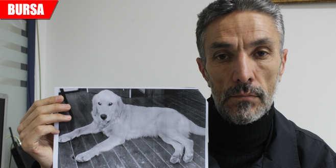 Dedektif gibi iz sürdü! Kayıp köpeğini ABD'de buldu