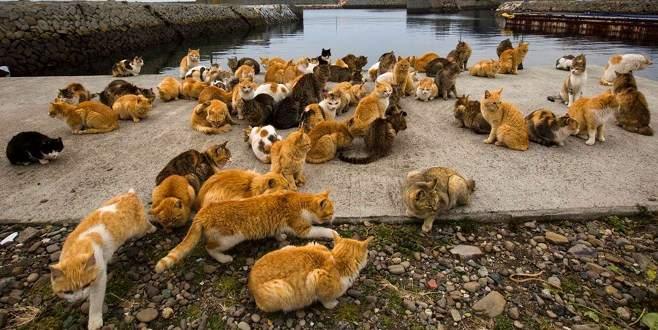 Kediler adayı işgal etti!