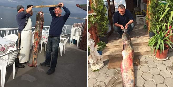 İznik Gölü'nde dev yayın balığı