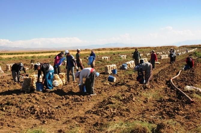 Van'da Sebze Üretimi