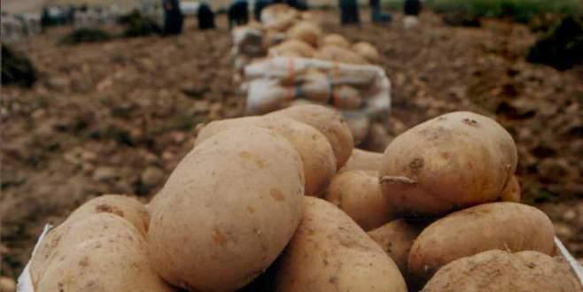 Patates bu kez üreticiyi üzdü