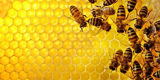 Arı ölümleri kaygı verici boyutlarda