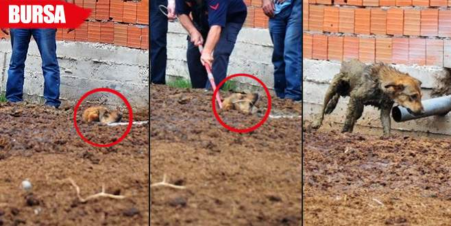 Gübre yığınına batan köpeği itfaiye kurtardı