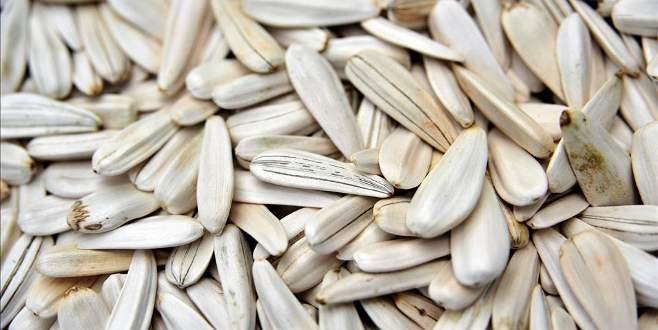 Tescilli 'İnegöl alası'nda hasat zamanı