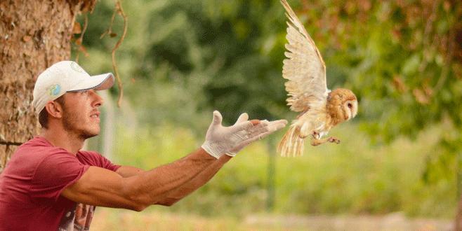 Yavru baykuşlar yuvadan böyle uçtu