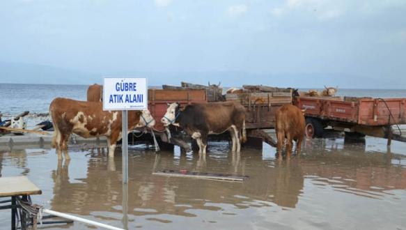 Fırtına hayvan pazarını yıktı, inekler ortada kaldı