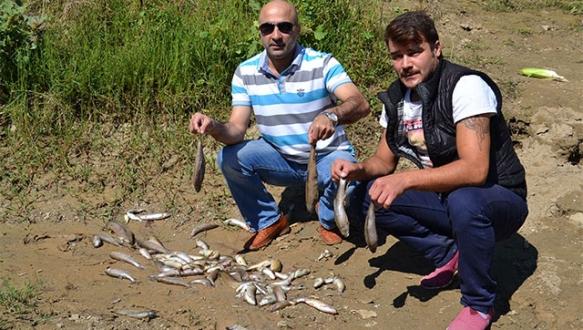 Yenişehir'de toplu balık ölümleri devam ediyor