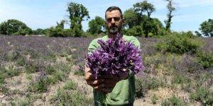 Nadir olarak Bursa'da yetişen doğal şifa kaynağı tehlike altında