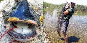 İznik Gölü'nde 1,7 metrelik yayın balığı yakalandı