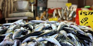 Türkiye'den 64 ülkeye balık