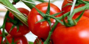 Rusya domates yasağını resmen kaldırdı