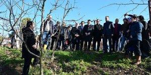 25 çiftçiye meyve budama sertifikası