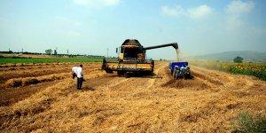 Çiftçiye yeni seçenek 'yerli buğday'