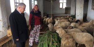 Genç çiftçilerin sürüleri genişliyor