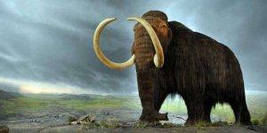 4 bin yıl önce soyları tükenmişti! Geri dönüyorlar...