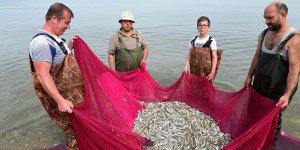 İznik Gölü'nde av sürüyor! Cips olacaklar...