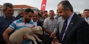 Koyun yetiştiricisine destek