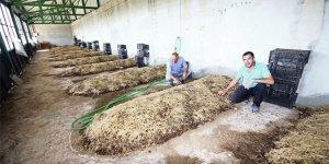 Solucan gübresine çiftçinin ilgisi artıyor
