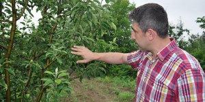 İnegöl'de şeftali ve elma üreticisine uyarı