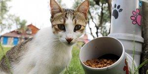 Sokak hayvanları için el emeği mamamatik