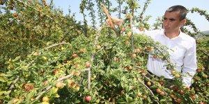 Yenişehir'de meyve ağaçları yükünü aldı