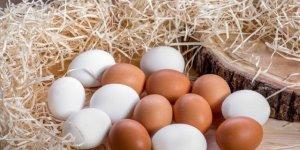 Beyaz ve kahverengi yumurta arasındaki bu farkı biliyor musunuz?