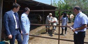 Mudanyalı genç çiftçiye büyükbaş hayvan desteği